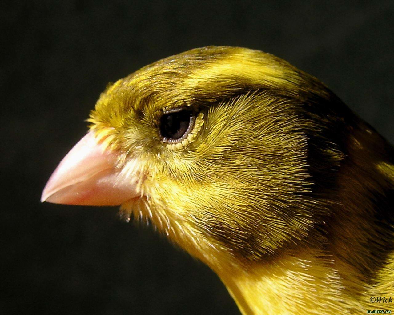 Птицы_Birds_Заставки_Фото_Zastavki.Biz качественные заставки с животными_Бо